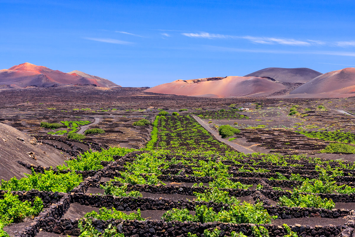 Vineyards in the middle of the volcanic landscape