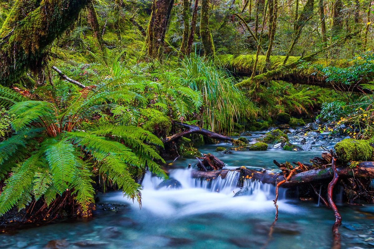 New Zealand Forest Stream